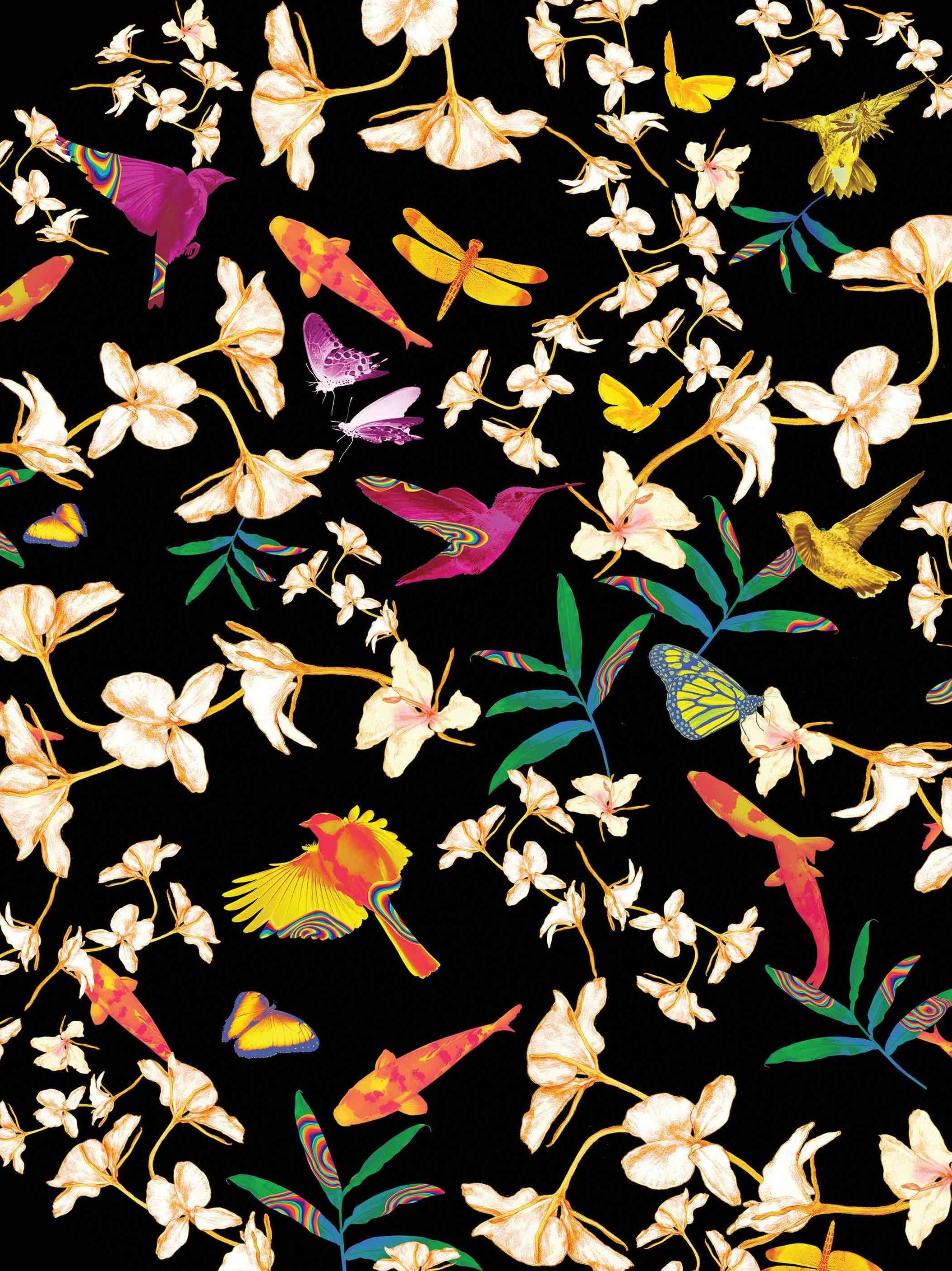 butterfly jacky tsai